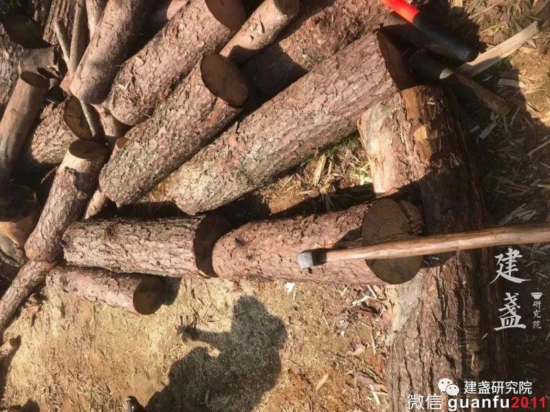柴烧,气烧,电烧怎么区分?为什么建盏柴窑一定要用松木呢?